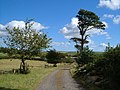 Farm driveway, Venn - geograph.org.uk - 234025.jpg
