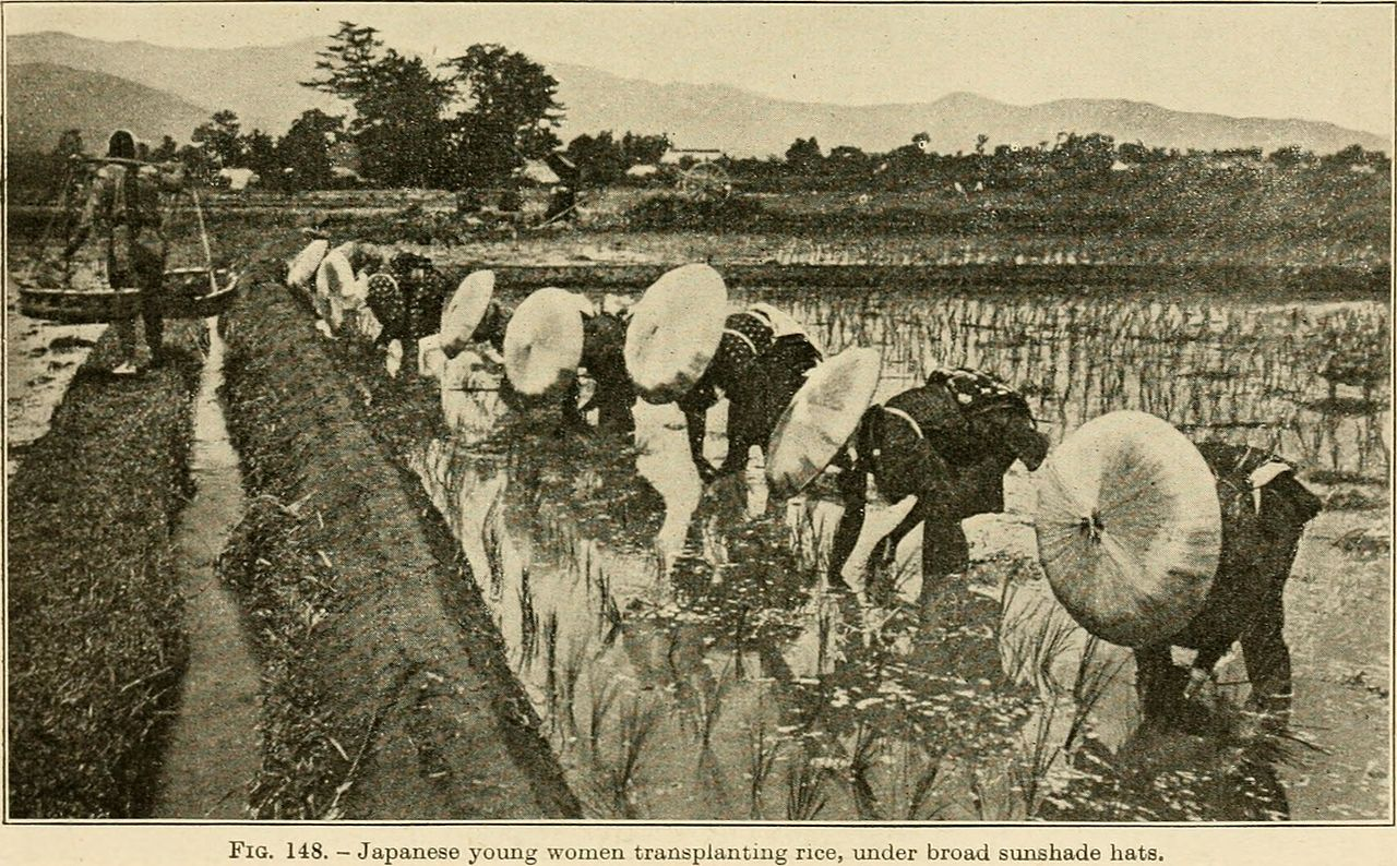 Japanese rice farming