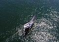 Farr 40 Aerial by Don Ramey Logan.jpg