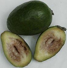 Acca sellowiana wikipedia the free encyclopedia for Pianta feijoa
