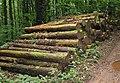 Felled conifers - geograph.org.uk - 508770.jpg
