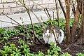 Feral cat in Saint Petersburg 2014-04-30-1.jpg