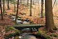 Fern Rock Nature Trail (14) (16131019841).jpg