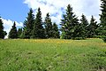Fichtelbergwiesen im Erzgebirge, Sachsen..2H1A3368WI.jpg