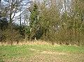 Field corner - geograph.org.uk - 1240604.jpg