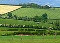 Fields near Holywood (1) - geograph.org.uk - 824350.jpg