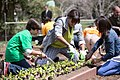 First Lady Michelle Obama and students from around the country participate in the White House Kitchen Garden spring planting on the South Lawn of the White House, April 4, 2013.jpg
