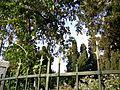 Fleur De Lis Fence (2690311798).jpg