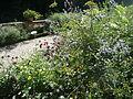 Fleurs à Bagatelle - P1300498.JPG