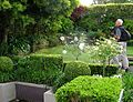 Flickr - brewbooks - Barry potographing Birkenhead garden.jpg