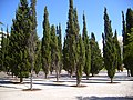 Flickr - ronsaunders47 - TREES PLANTED IN CONCRETE. DAFT I THINK.jpg