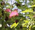 Flower 2 (3203664691).jpg