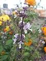Flowers55.jpg