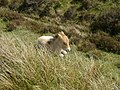 Foal by The Roadside - geograph.org.uk - 446434.jpg