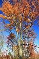 Foliage Walk (10) (30264151721).jpg