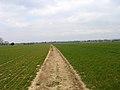Footpath, near Yapton - geograph.org.uk - 138596.jpg