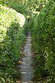 Footpath from Westhorpe - geograph.org.uk - 852217.jpg