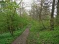 Footpath through woods above Stanhope Burn - geograph.org.uk - 1286282.jpg
