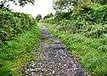 Footpath to Penmaen Burrows - geograph.org.uk - 1492035.jpg