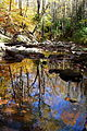 Forest-stream-reflections - West Virginia - ForestWander.jpg