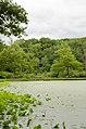 Forest Park, Springfield, MA 01108, USA - panoramio (44).jpg