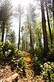 Forest Sunlight (7351993088).jpg