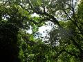 Forest in Kon Tum.jpg