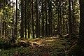 Forest in teleborg naturreservat.jpg