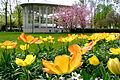 Frühling im Bad Mergentheimer Kurpark. 19.jpg