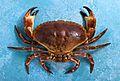 Fresh Crab.jpg