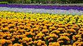 Furano flowers (7662399984).jpg