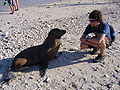 Galapagos sea lion with tourist.jpg