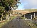 Gated track through Sweet Lamb - geograph.org.uk - 1116561.jpg