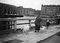 Gateliv i Sovjetunionen - Geiter på byvandring (1935).jpg