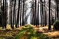 Gmina Manowo, Poland - panoramio (7).jpg