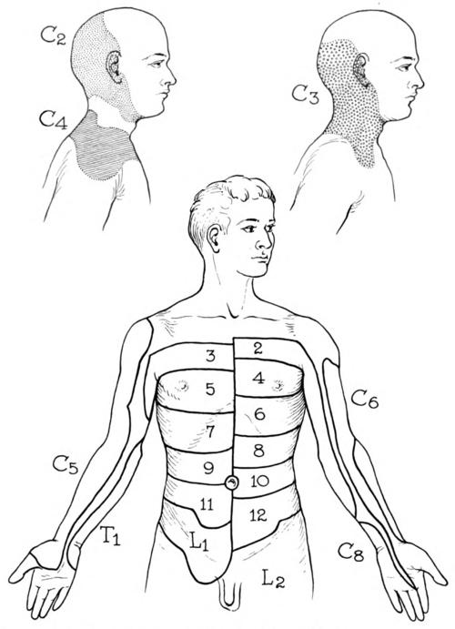 Dermatome Anatomy