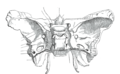 Gray145 (blank).png