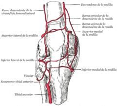 arteria o la vena femoral