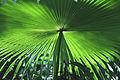 Green Is Beautiful (8042446181).jpg