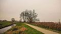 Groep essen (Fraxinus excelsior) aan fietspad om Langweerderwielen (Langwarder Wielen). Oostkant 01.jpg