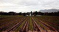 Groot Constantia - panoramio (13).jpg