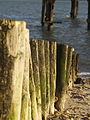 Groyne and WWII Relic at Stansore Point - geograph.org.uk - 404862.jpg