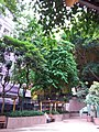 HK 西營盤 Sai Ying Pun 第三街遊樂場 Third Street Playground 公園 LCSD park August 2018 SSG.jpg