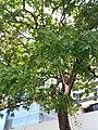 HK Central 愛丁堡廣場 Edinburgh Place 香港大會堂紀念花園 City Hall Memorial Garden green leaves July 2019 SSG 02.jpg