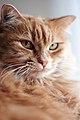 HSH The Cat.jpg