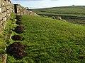 Hadrian's Wall, the Vallum and molehills at Thorny Doors - geograph.org.uk - 1068648.jpg