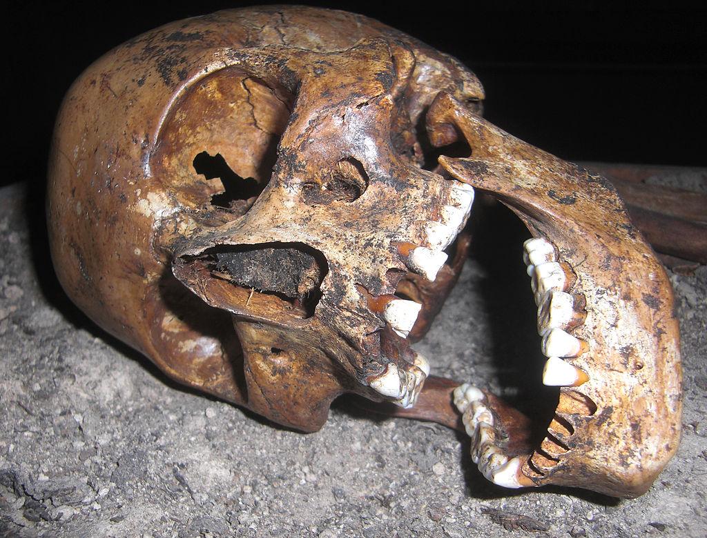 Hallonflickans kranium