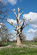 Hanbury Hall Park - dead tree.jpg