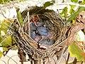 Hatchlings by Sudiksha.jpg