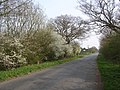 Hawthorn hedgerow - geograph.org.uk - 399259.jpg